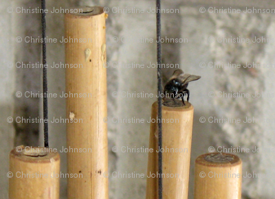 bee's and bamboo