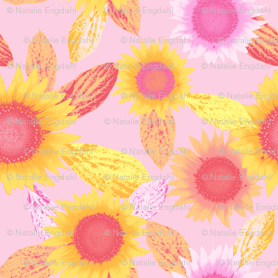 sunflower, pink