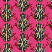 congo tree frog pink