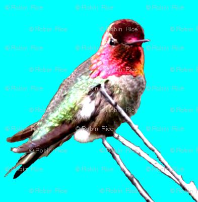 Hummingbird Repeat