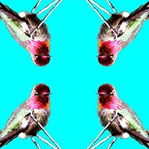 Hummingbird Repeat