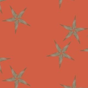 starfall (tomato)