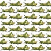 Rrrrrgrasshopper3_small_shop_thumb