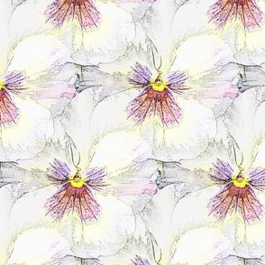 Fairy white violet