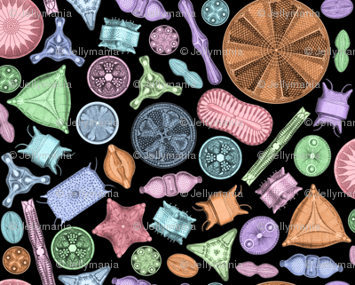 Diatoms on Black