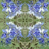 Bluebonnets2_shop_thumb