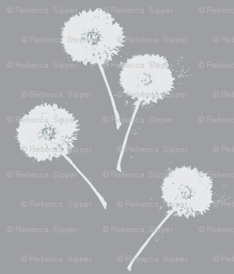 Dandelions on Grey