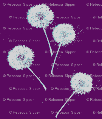 Dandelions on Purple