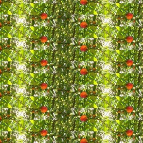 pomegranate buds