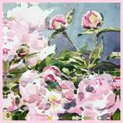 "C'EST LA VIVâ""¢ Garden Lark Collection_PEONY large squares"