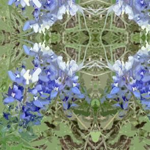 bluebonnets2
