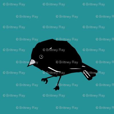 Chatham Island Black Robin