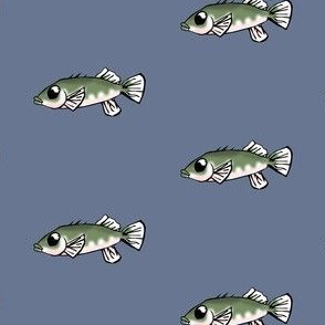 Unarmored Threespine Stickleback