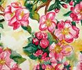 Rrapple_blossoms_comment_70488_thumb