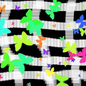 Butterflies Madness