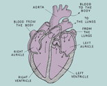 Rheart_diagram_teal_mauve_thumb