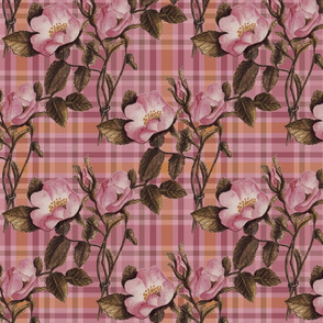 Charlotte Bronte's Wild Roses Plaid