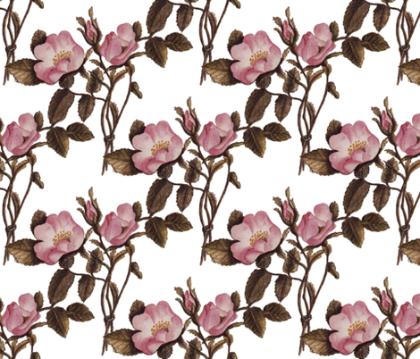 Charlotte Bronte's Wild Roses on White fabric by peacoquettedesigns on Spoonflower - custom fabric