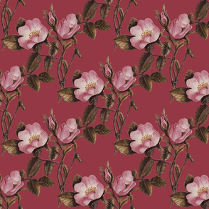 Charlotte Bronte's Wild Roses on Fuchsia