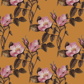 Charlotte Bronte's Wild Roses on Gold