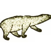 inuit_nanuk_polar_bear_black