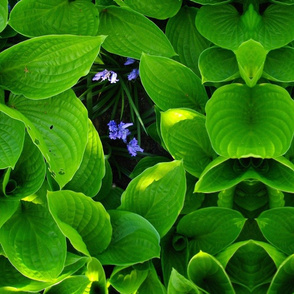 FOLIAGE_BLUEBELLS
