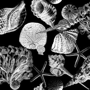 Antique Sea Shells - B&W