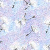 Rrrrdandelion_seeds_shop_thumb