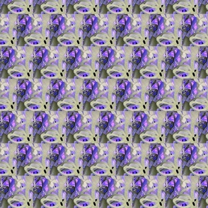 Scandinavia Lavender