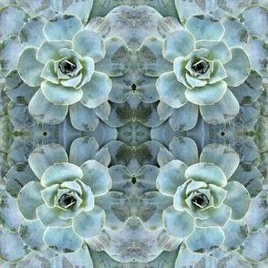 Aqua Succulent
