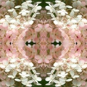Hydrangea Blossoms-4932