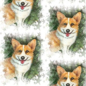 Pembroke Welsh Corgi and Stars