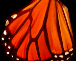 Rbutterfly_wing_oil_thumb
