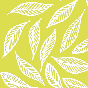 yellow-green and white feathery leaves
