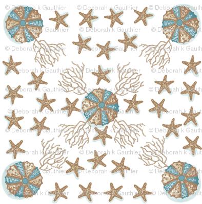 Sea Stars and Urchins