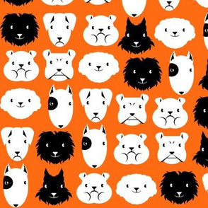 chiens en lignes fond orange