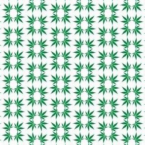 CannabisFoulard_Cannabis