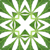 Cannabis-Pattern-01