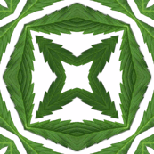Cannabis-Pattern-06