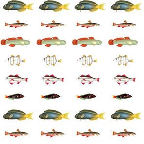 Lotsofish2