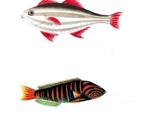 Lotsofish2_thumb