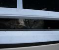Rrrcats_eyesjan3_comment_128381_thumb