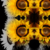 Sunflowers fade to Black and White