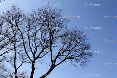 TreeWater