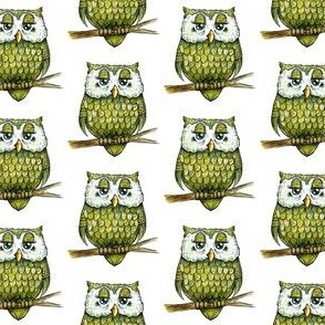 Smaller Green Owl