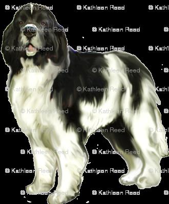Landseer newfoundland dog