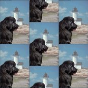 Rrrrrnewfoundland_and_lighthouse_portrait_style_shop_thumb