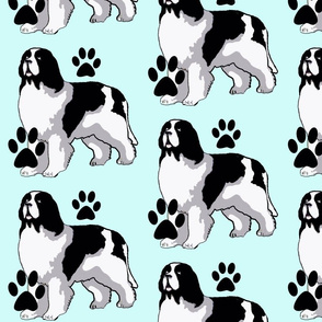 Landseer Newfoundland dog with paw prints