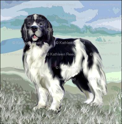 Landseer Newfoundland Dog Standing
