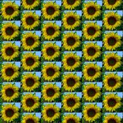 Rrrrrrsunflowertile_shop_thumb